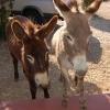 Kudu Ridge Donkeys