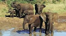 greater addo attraction