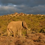 Kuzuko Elephant Lodge